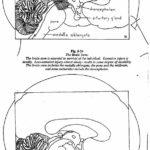 Родившийся мозг (стр. 141-160)