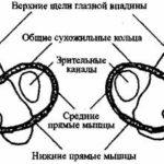 Краниосакральная терапия II и остеопатия (стр. 61-80)